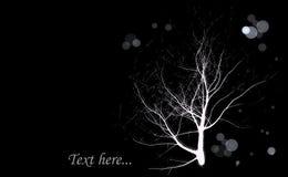 Υπόβαθρο δέντρων σκοταδιού Στοκ Εικόνες