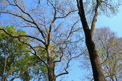 Υπόβαθρο δέντρων Στοκ Φωτογραφία