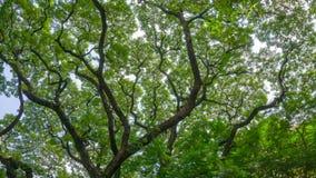 Υπόβαθρο δέντρων branchs Στοκ εικόνα με δικαίωμα ελεύθερης χρήσης