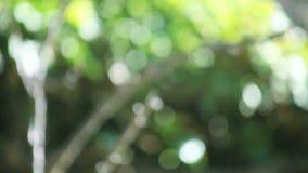 Υπόβαθρο δέντρων Defocused απόθεμα βίντεο
