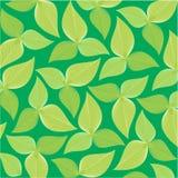 Υπόβαθρο ή σύσταση με τα φύλλα Στοκ Εικόνα