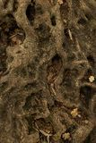 Υπόβαθρο ή σύσταση τοίχων αμμοχάλικου στοκ εικόνες