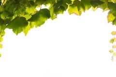 Υπόβαθρο αμπέλων με το διάστημα αντιγράφων Στοκ Εικόνα