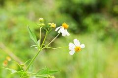Υπόβαθρο ανθών άνοιξη - floral σύνορα των πράσινων φύλλων Στοκ Εικόνες