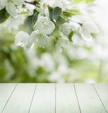 Υπόβαθρο ανοίξεων ανθών με τα άσπρα λουλούδια της Apple Στοκ φωτογραφία με δικαίωμα ελεύθερης χρήσης