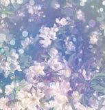 Υπόβαθρο από άσπρα florets άνοιξη στους κλάδους Στοκ φωτογραφία με δικαίωμα ελεύθερης χρήσης