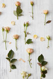 Υπόβαθρο από τα τριαντάφυλλα Στοκ φωτογραφίες με δικαίωμα ελεύθερης χρήσης