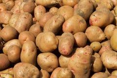 Υπόβαθρο από τις πατάτες Στοκ φωτογραφίες με δικαίωμα ελεύθερης χρήσης
