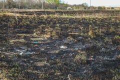 Υπόβαθρο από τις τέφρες της μμένης χλόης Τέφρα εγκαταστάσεων στον τομέα μετά από την πυρκαγιά που καίγεται στοκ εικόνα με δικαίωμα ελεύθερης χρήσης