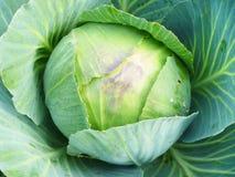Υπόβαθρο από το πράσινο φύλλο του λάχανου Στοκ φωτογραφία με δικαίωμα ελεύθερης χρήσης