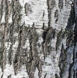 Υπόβαθρο από το φλοιό της σημύδας στοκ εικόνες