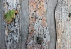 Υπόβαθρο από το φλοιό ενός δέντρου Στοκ φωτογραφίες με δικαίωμα ελεύθερης χρήσης