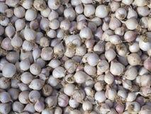 Υπόβαθρο από φρέσκο Garlics Στοκ Εικόνες