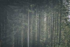 Υπόβαθρο δέντρων πεύκων βουνών στοκ φωτογραφία με δικαίωμα ελεύθερης χρήσης