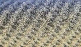 Υπόβαθρο ενός φύλλου της πλάκας που καλύπτεται με τον παγετό Στοκ εικόνες με δικαίωμα ελεύθερης χρήσης