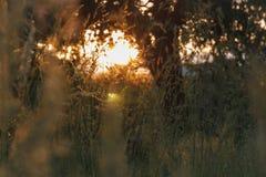 Υπόβαθρο ενός όμορφου θερινού βραδιού με τις ακτίνες του φωτός του ήλιου α Στοκ Εικόνα