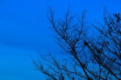 Υπόβαθρο ημέρας αποκριών και δέντρο σκιαγραφιών στο χρόνο λυκόφατος βραδιού ουρανού όμορφο Στοκ φωτογραφία με δικαίωμα ελεύθερης χρήσης
