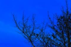Υπόβαθρο ημέρας αποκριών και δέντρο σκιαγραφιών στο χρόνο λυκόφατος βραδιού ουρανού όμορφο Στοκ Εικόνες