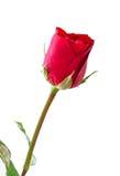 Υπόβαθρο ημέρας βαλεντίνου με τα κόκκινα τριαντάφυλλα Στοκ Εικόνες