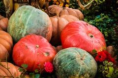 Υπόβαθρο ημέρας των ευχαριστιών κολοκύθας φθινοπώρου Στοκ Φωτογραφία