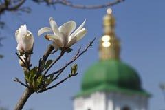 Υπόβαθρο η εκκλησία και το magnolia άνθισης στοκ εικόνες με δικαίωμα ελεύθερης χρήσης