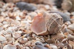 Υπόβαθρο θέματος θάλασσας με διεσπαρμένη την κοχύλια κινηματογράφηση σε πρώτο πλάνο Συλλογή της Shell θάλασσας στοκ εικόνα