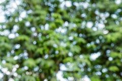 Υπόβαθρο θαμπάδων δέντρων bokeh Στοκ Εικόνες
