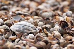 Υπόβαθρο θαλασσινών κοχυλιών, clouseup Στοκ Εικόνες