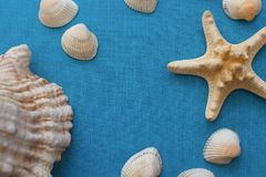 Υπόβαθρο θερινής θάλασσας - κοχύλια, αστέρι σε ένα μπλε υπόβαθρο υφάσματος Στοκ Εικόνες