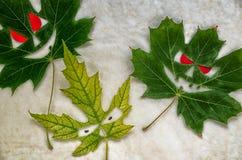 Υπόβαθρο διακοπών αποκριών - φύλλα σφενδάμου όπως τα τρομακτικά πρόσωπα με τα κόκκινα μάτια Στοκ Εικόνες