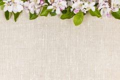 Υπόβαθρο λινού με τα άνθη μήλων Στοκ Φωτογραφίες