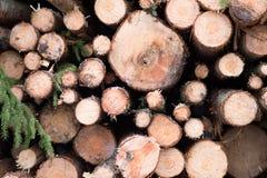 Υπόβαθρο Ιστού ξυλείας Στοκ φωτογραφίες με δικαίωμα ελεύθερης χρήσης