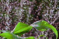 Υπόβαθρο κήπων στοκ φωτογραφίες