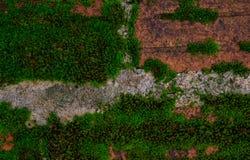 Υπόβαθρο και σύσταση φύσης βρύου Στοκ Εικόνα
