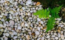 Υπόβαθρο και σύσταση Stone, βρύο, φτέρη φύσης Στοκ φωτογραφίες με δικαίωμα ελεύθερης χρήσης