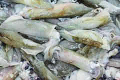 Υπόβαθρο καλαμαριών στην αγορά ψαριών στοκ εικόνα με δικαίωμα ελεύθερης χρήσης