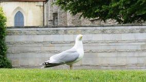 Υπόβαθρο καρτών πουλιών γλάρων Στοκ Φωτογραφίες