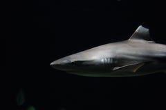 Υπόβαθρο καρχαριών Στοκ Φωτογραφίες