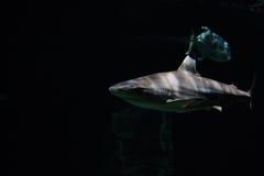 Υπόβαθρο καρχαριών Στοκ Εικόνες
