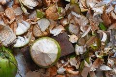 Υπόβαθρο καρύδων και κοχυλιών καρύδων στοκ εικόνες