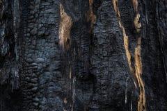 Υπόβαθρο, κινηματογράφηση σε πρώτο πλάνο του μμένου ξύλου Απανθρακωμένο δέντρο, μμένη ξύλινη σύσταση Στοκ Εικόνα