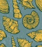 Υπόβαθρο κοχυλιών θάλασσας. Στοκ Εικόνες