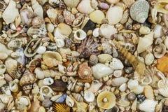 Υπόβαθρο κοχυλιών θάλασσας Στοκ εικόνα με δικαίωμα ελεύθερης χρήσης