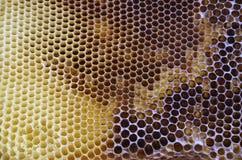 Υπόβαθρο κυψελωτών σχεδίων Στοκ εικόνα με δικαίωμα ελεύθερης χρήσης
