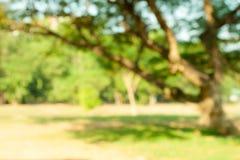 Υπόβαθρο κλάδων θαμπάδων δέντρων Στοκ φωτογραφίες με δικαίωμα ελεύθερης χρήσης