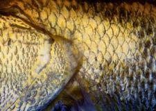 Υπόβαθρο κλιμάκων ψαριών τέχνης Στοκ εικόνες με δικαίωμα ελεύθερης χρήσης