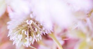 Υπόβαθρο λουλουδιών - ηλιόλουστο λιβάδι με το υπόβαθρο λουλουδιών με τις θαμπάδες - bokeh στοκ εικόνα με δικαίωμα ελεύθερης χρήσης