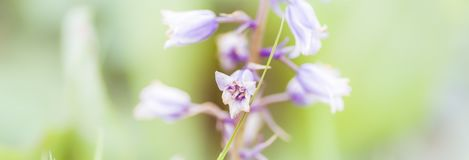 Υπόβαθρο λουλουδιών - ηλιόλουστο λιβάδι με το υπόβαθρο λουλουδιών με τις θαμπάδες - bokeh στοκ εικόνες
