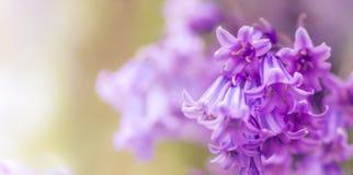 Υπόβαθρο λουλουδιών - ηλιόλουστο λιβάδι με το υπόβαθρο λουλουδιών με τις θαμπάδες - bokeh στοκ εικόνες με δικαίωμα ελεύθερης χρήσης