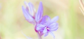 Υπόβαθρο λουλουδιών - ηλιόλουστο λιβάδι με το υπόβαθρο λουλουδιών με τις θαμπάδες - bokeh στοκ φωτογραφία με δικαίωμα ελεύθερης χρήσης
